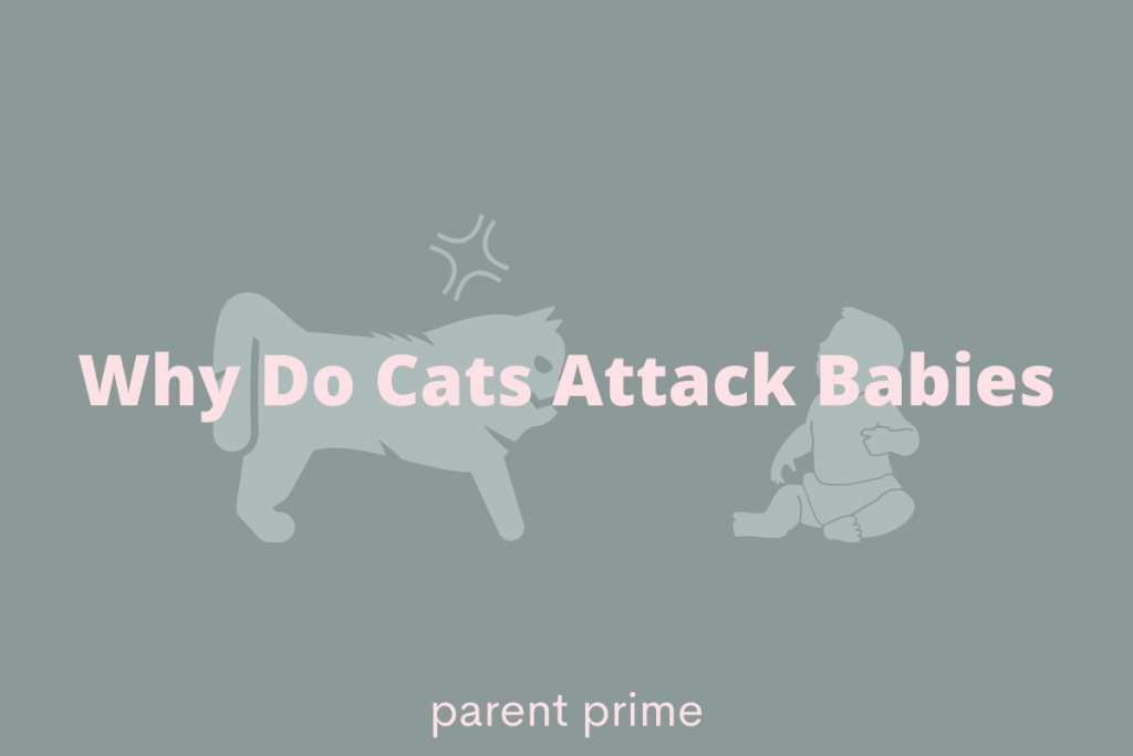 will cats attack babies